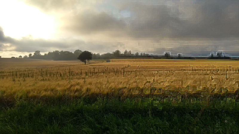 Field with low clouds